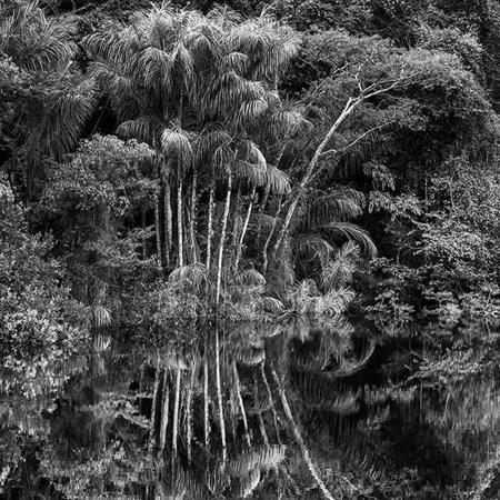 © Sebastião Salgado/Contrasto Rio Jaú. Stato di Amazonas, Brasile, 2019